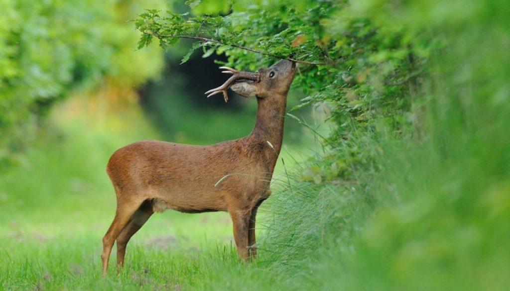 Comment connaître le type de gibier sur son domaine de chasse ?